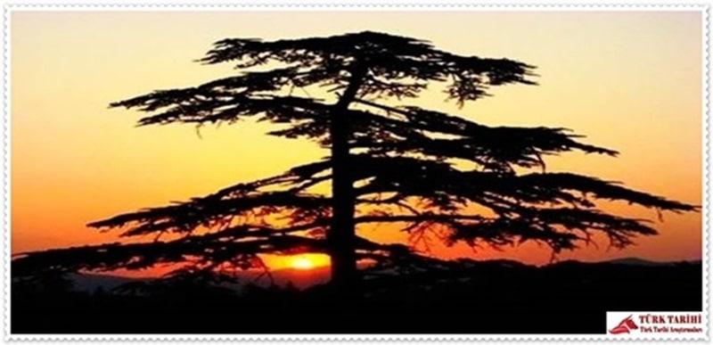 8. Kızıldağ Milli Parkı (Isparta)  Akdeniz Bölgesi'nde Isparta ili, Şarkikaraağaç ilçesi sınırları içerisinde yer almaktadır. Şarkikaraağaç' a 5 km, Isparta'ya 120 km mesafededir. Kızıldağ Milli Parkı; sedir ormanları ve maki topluluklarının oluşturduğu flora çeşitliliğinin sergilendiği, Beyşehir Gölü'nün kuşbakışı gözlenebildiği doğal peyzaj çeşitliliğine sahip bir sahadır. Milli park içerisinde günübirlik rekreasyonel aktivitelerden piknik, treking, doğa yürüyüşleri, uzun süreli rekreasyonel aktivitelerden de çadırlı ve karavanlı kamping yapılabilir. Çadır ile konaklama yapılabilir. Ayrıca sahada Milli Parklar ve Av-Yaban Hayatı Genel Müdürlüğü'ne ait bungalowlardan faydalanmak mümkündür.